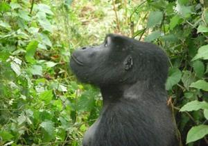 Kenya to Kigali Adventure Nairobi, Kenya